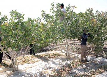 Ardakan Farmers' Water Consumption Unsustainable