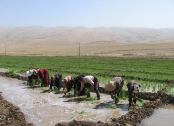 Iran: New Strategies Needed to Reduce Water Use