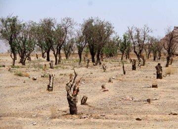 Yazd Water Problem Worsens