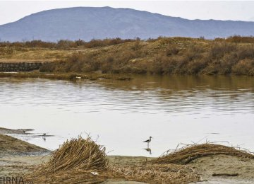 Fresh Call for Restoration and protection of Wetlands