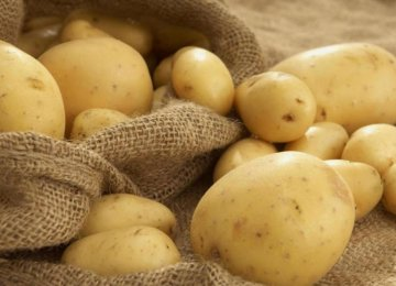 Potato Exports Earn $26m in  4 Months