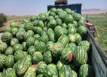 Watermelon Exports Earn $95m in Three Months