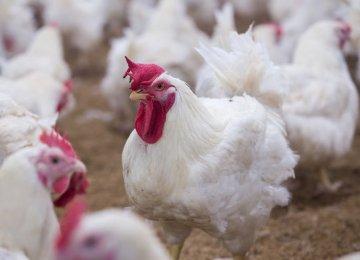 H5N8 Bird Flu Reported Near Tehran