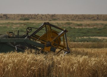 Iran's Agricultural Yields Expected to Increase by 3 Million Tons