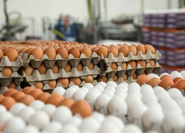 65K Tons of Eggs Exported in Nine Months