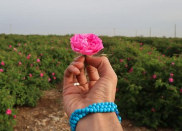 Damask Rose Oil Exports Exceed $200m in Fiscal 2020-21