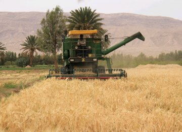 Barley Production Declines Due to Low Precipitation