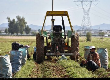 Khuzestan Agro Exports Top $1.1 Billion