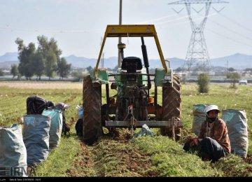 Khuzestan Agro Exports Top $1.1 Billion