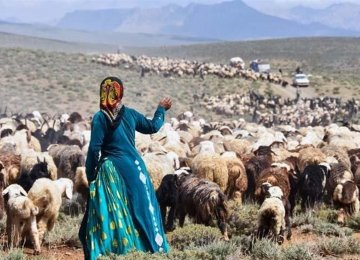 Nomadic Livelihood in Jeopardy as Red Meat Consumption Declines