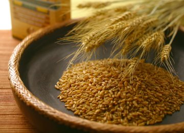 Iran has been self sufficient in wheat production for two years now and only imports wheat for export purposes after processing it into flour.