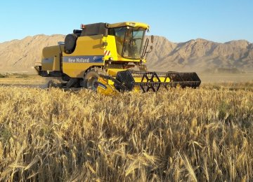 37% Decline in Gov't Wheat Purchases From Local Farmers