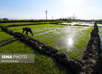 No Subsidy for Rice Import