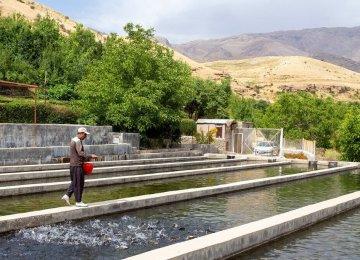 Construction of Iran's Biggest Super-Intensive Fish Farm Begins