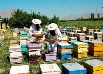 Mandatory Standards for Honey in the Making