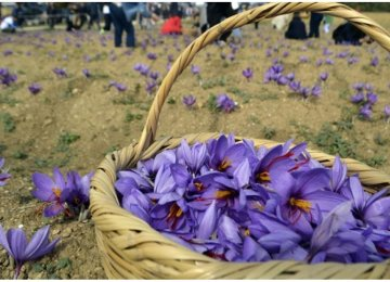 Saffron Exports Earn Over $110m