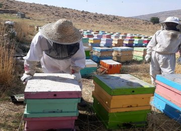 West Azarbaijan Tops Iranian Provinces in Honey Production
