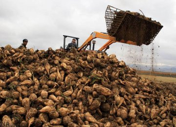 West Azarbaijan: Iran's Sugar Beet Production Hub