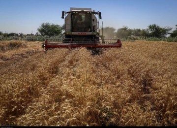 Land Under Wheat Cultivation Reaches 6 Million Hectares