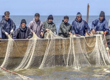 Iran's Seafood Exports Rise 9% to $290m in Nine Months: Interview
