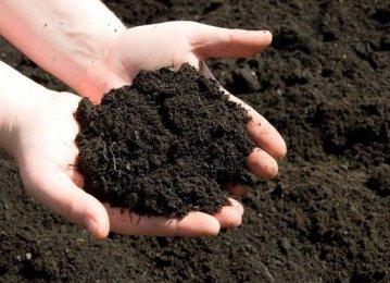 Iran to Export Bio-Fertilizers to Africa
