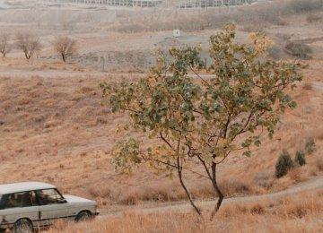 Exhibitions Commemorate Abbas Kiarostami