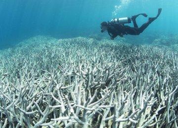 Chabahar Coral Reefs Suffer Serious Bleaching