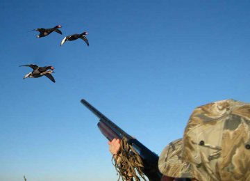 Bird Hunting Permitted Barring Serious Outbreaks of Disease
