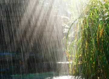 The Persian Gulf and the Oman Sea catchment area in the south has registered the biggest decline in rainfall.
