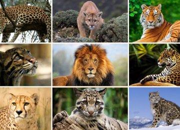 Wildlife Day Spotlights Majestic Big Cats