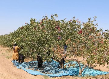 Nuts, Dried Fruits Exports Fetch Over $2 Billion in Fiscal 2020-21