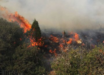 Smart Tech to Help Guard Golestan National Park Against Wildfires