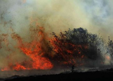 Smart Tech to Guard Nat'l Parks Against Wildfires