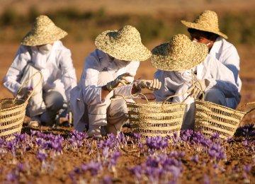 Iran: Startup Easing Saffron Farmers' Market Access