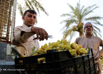 Iran Agrifood Exports Up 7.9%, Imports Fall 4.5 Percent