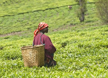 Foreign Firms Buying  Africa's Fertile Land