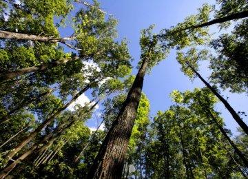 Environmental Bill Irks Paper Industry