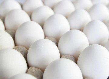 Egg Export