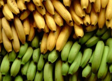 Banana Imports From Philippines