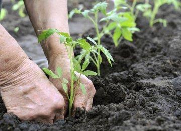 Agricultural Achievement
