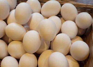 Daily Egg Exports at 300 Tons