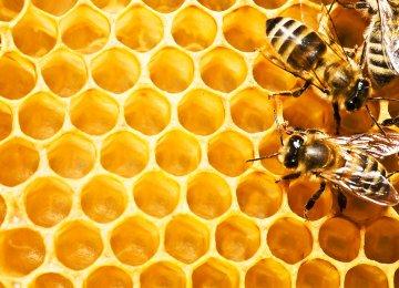 Khoy, Iran's Top Honey Producer