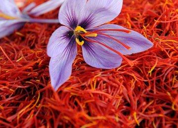Saffron Exports Decline