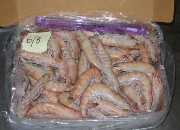 West Azarbaijan Prawn Exports
