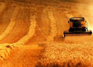 World Grain Traders  Lining Up for Business