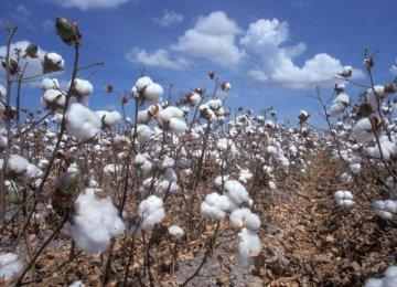 Cotton Farms Shrink