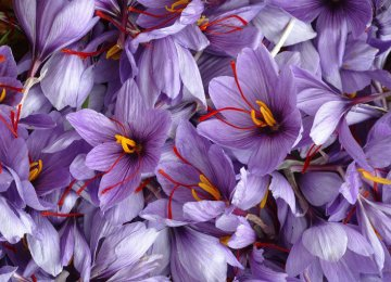 Saffron Exports Below Expectations