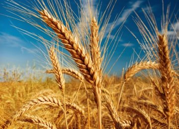 Gov't Wheat Purchase