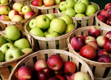 Apple Output at 305m Tons by Yearend