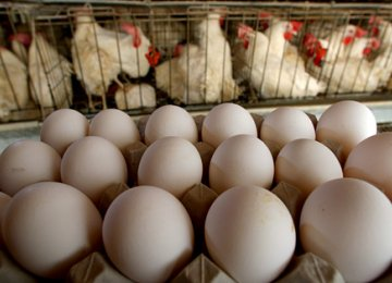 Chicken, Eggs Exports to Iraq, Afghanistan Resume